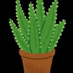 plant_aloe